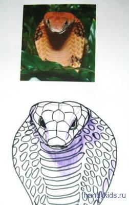 Голова кобры рисунок