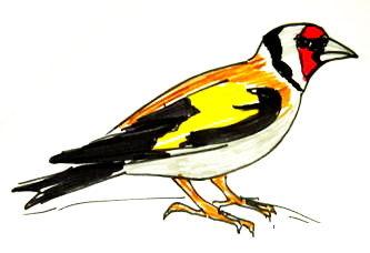 Рисунок Щегол