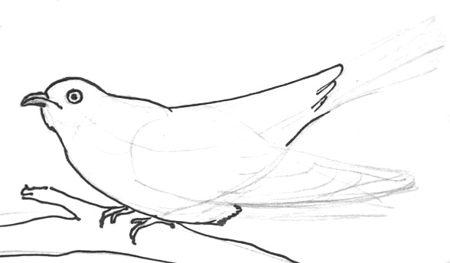 Урок рисования кукушки поэтапно