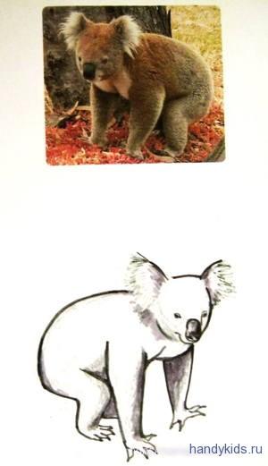 koala 1 002