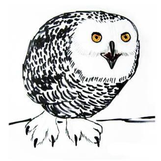 Полярная сова рисунок