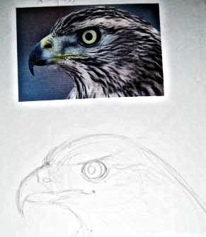 Как нарисовать голову сокола