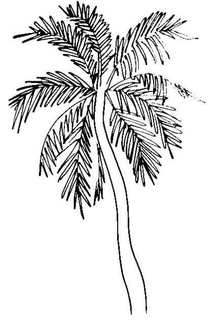 Рисунок -финиковая пальма