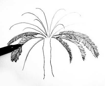 Поэтапное рисование пальмы