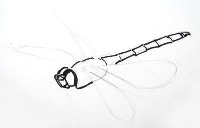 Поэтапный рисунок стрекозы в полёте.
