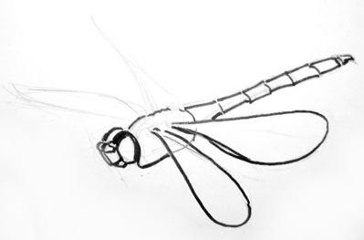 Рисование стрекозы в полёте