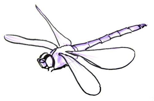Рисунок -стрекоза в полёте