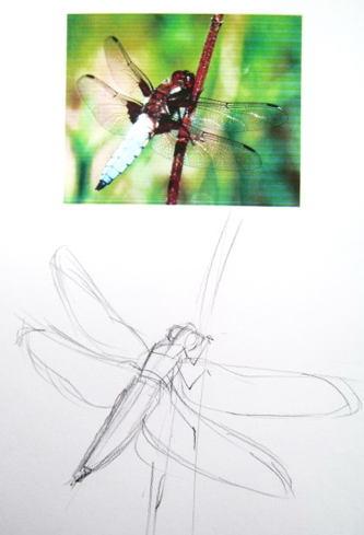 Стрекоза -рисунок карандашом