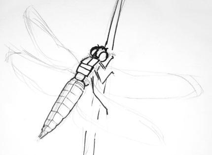 Поэтапный рисунок плоской стрекозы