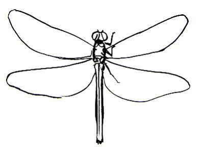 Рисунок -строение стрекозы