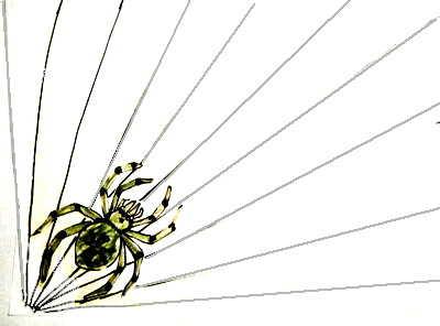 Рисуем паука на паутине