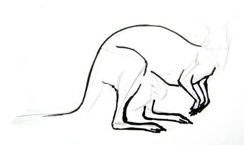 Поэтапный рисунок рыжегокенгуру