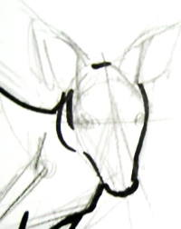 Рисуем голову кенгуру