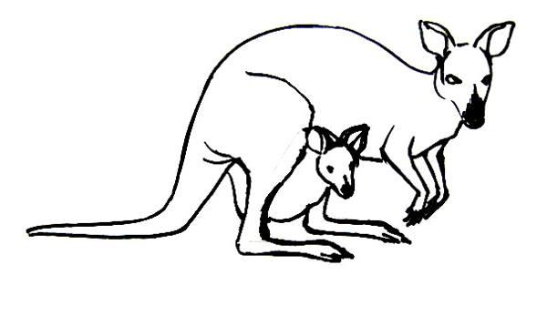 Кенгуру рисунок 13