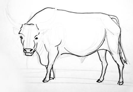 Рисуем быка