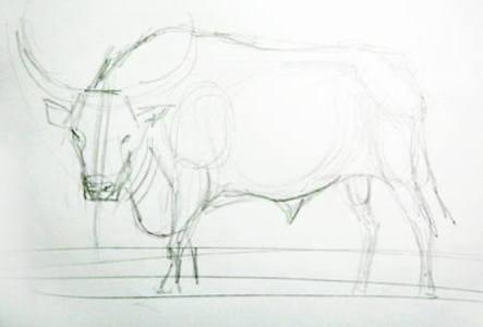 Карандашный набросок быка