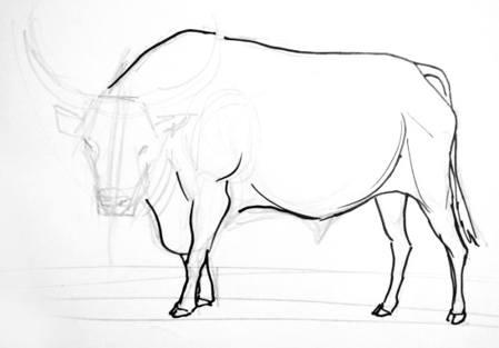 Рисуем быка поэтапно - ноги.