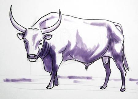 Рисунок бык