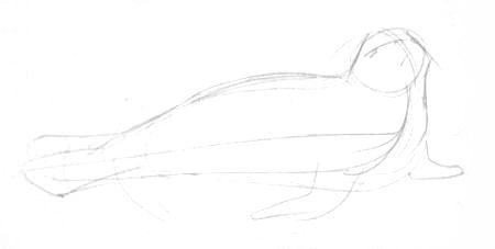 Тюлень рисунок карандашом