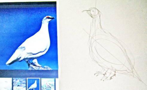 КАк нарисовать арктическую куропатку