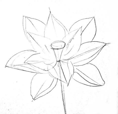 Цветок лотоса -рисунок карандашом