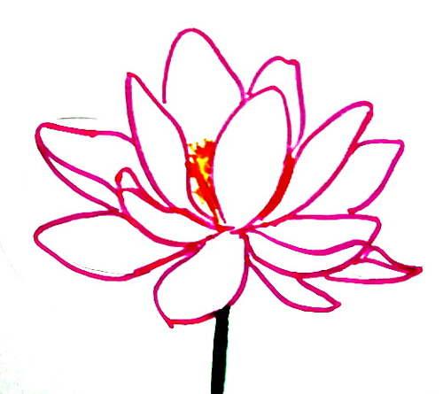 Цветок лотоса рисунок