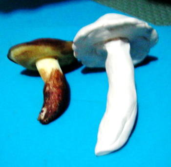 Лепим грибы