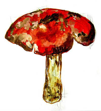Как нарисовать гриб Мухомор