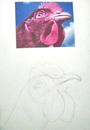 Как нарисовать голову петуха