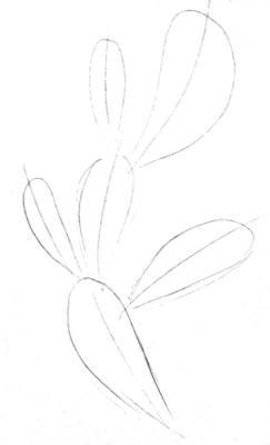 Кактус - рисунок карандашом