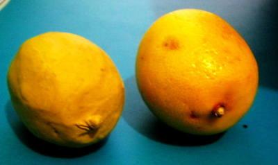 Лимон из пластилина