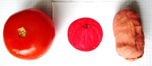 Слепим помидор с натуры