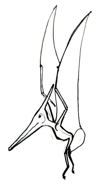 Рисунок птеранодон в полёте