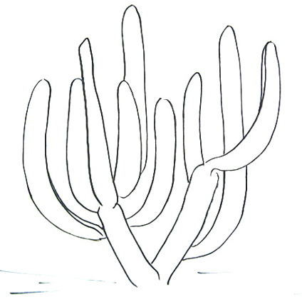 Как нарисовать кактус