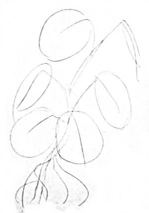 Как нарисовать лист монстеры