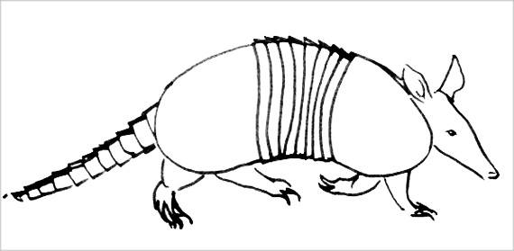 Броненосец -рисунок животного