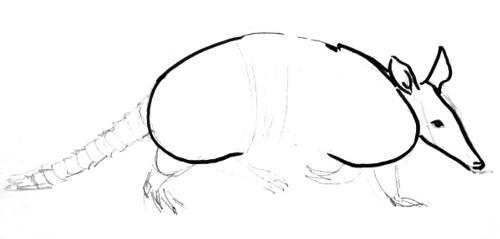 Броненосец - поэтапный рисунок