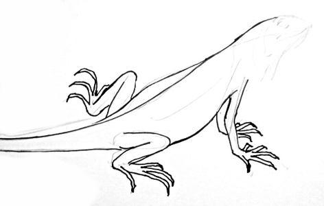 Урок поэтапного рисования Игуаны.