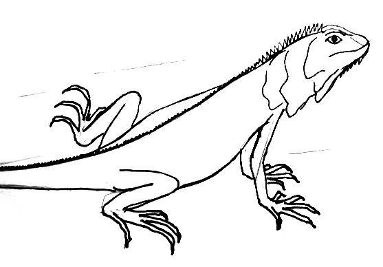 Раскраска-рисунок Игуана