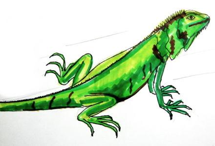 Игуаны рисунок