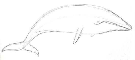 Кит -рисунок карандашом