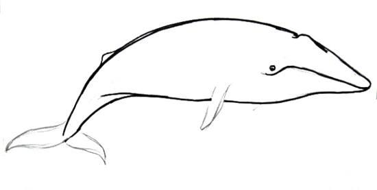 Нарисуем синего кита