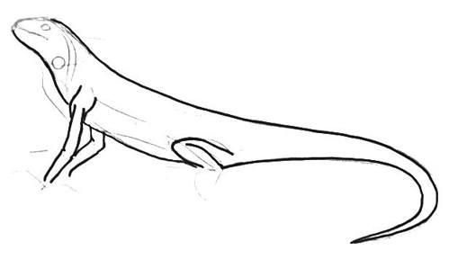 Нарисуем игуану