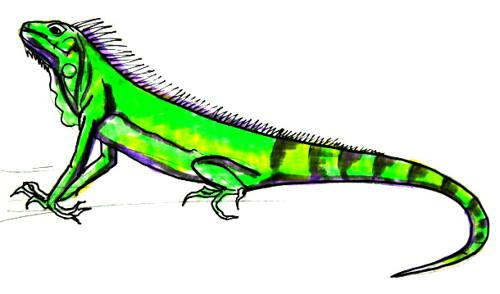 Игуана рисунок 17