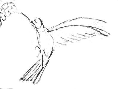 Колибри - рисунок карандашом