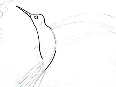 Рисуем колибри поэтапно