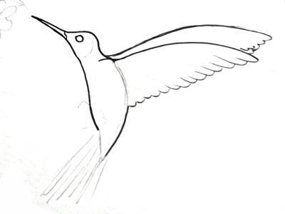 Поэтапный рисунок колибри
