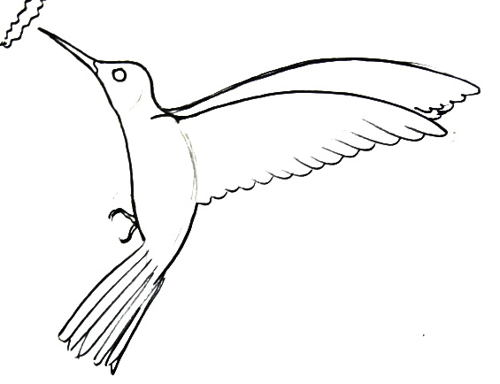 Рисунок колибри