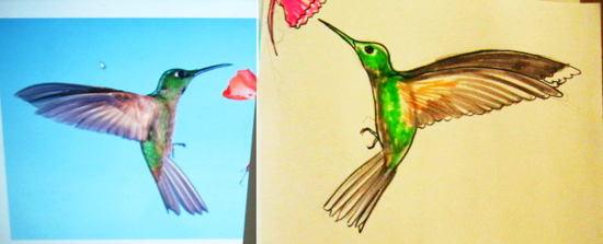 Как нарисовать колибри