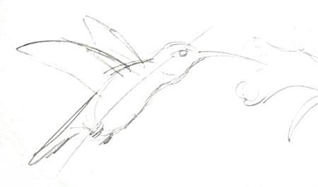 Эскиз колибри